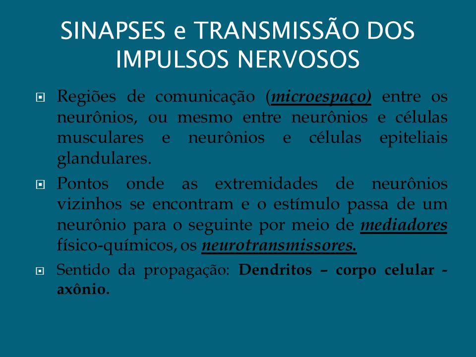 SINAPSES e TRANSMISSÃO DOS IMPULSOS NERVOSOS Regiões de comunicação ( microespaço) entre os neurônios, ou mesmo entre neurônios e células musculares e