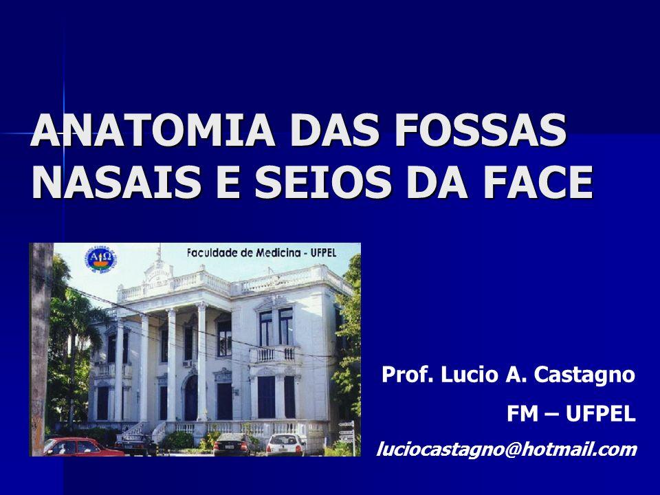 ANATOMIA DAS FOSSAS NASAIS E SEIOS DA FACE Prof. Lucio A. Castagno FM – UFPEL luciocastagno@hotmail.com