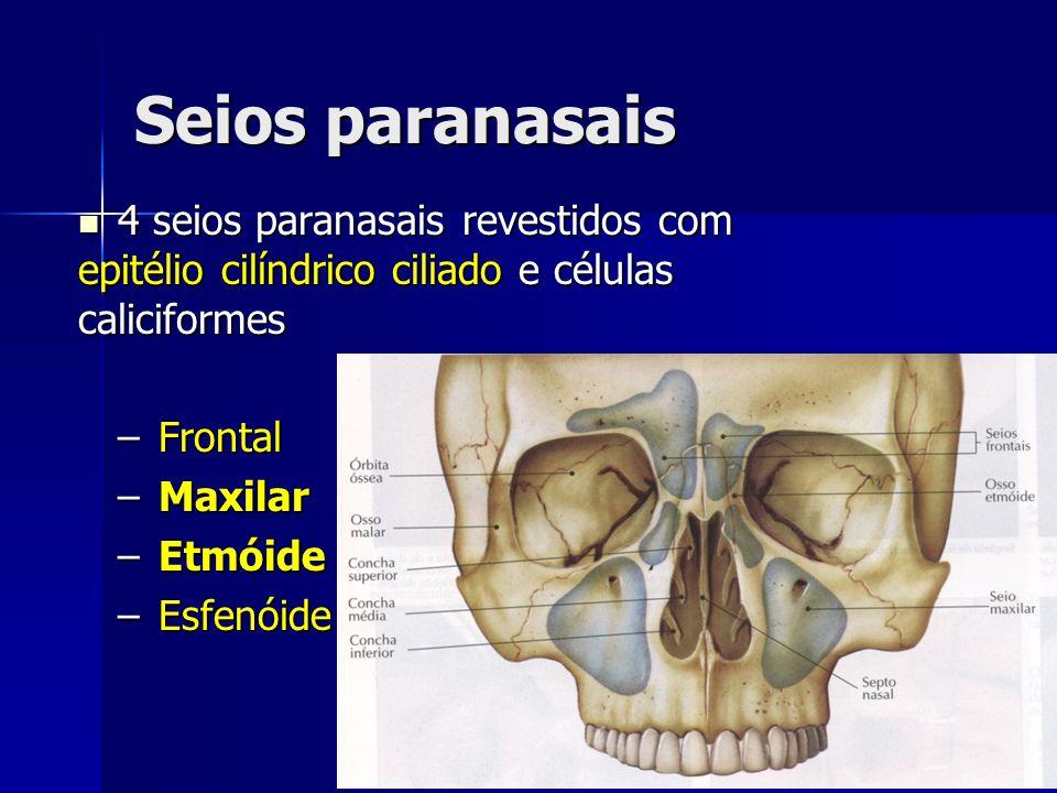 Seios paranasais 4 seios paranasais revestidos com epitélio cilíndrico ciliado e células caliciformes 4 seios paranasais revestidos com epitélio cilín