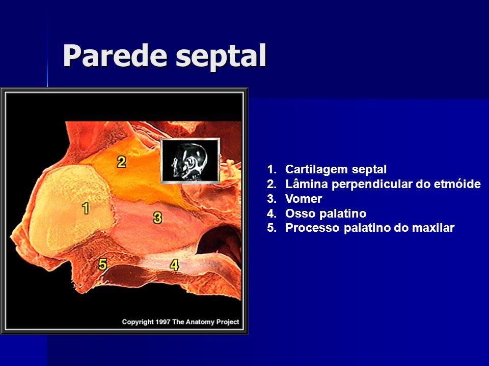 Parede septal 1.Cartilagem septal 2.Lâmina perpendicular do etmóide 3.Vomer 4.Osso palatino 5.Processo palatino do maxilar