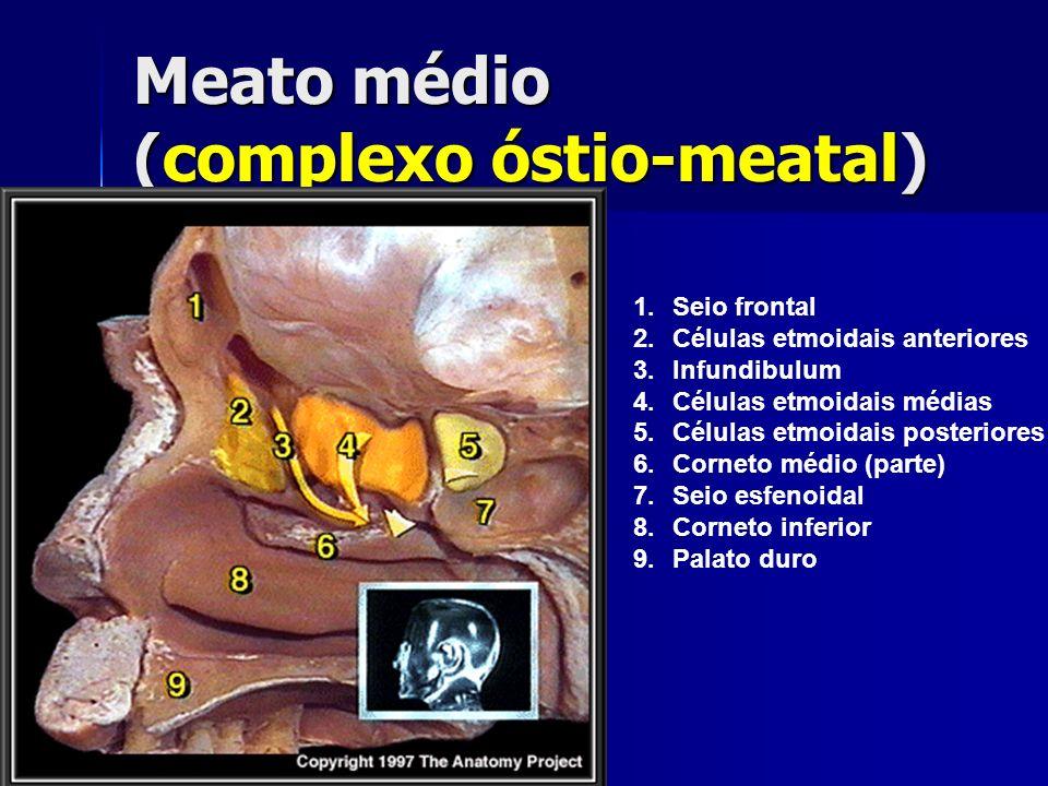 Meato médio (complexo óstio-meatal) 1.Seio frontal 2.Células etmoidais anteriores 3.Infundibulum 4.Células etmoidais médias 5.Células etmoidais poster