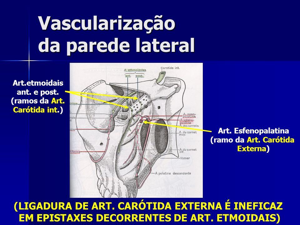 Vascularização da parede lateral Art.etmoidais ant. e post. (ramos da Art. Carótida int.) Art. Esfenopalatina (ramo da Art. Carótida Externa) (LIGADUR