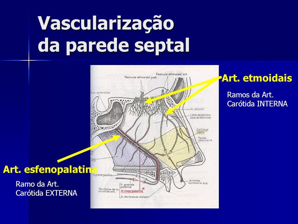 Vascularização da parede septal Art. etmoidais Art. esfenopalatina Ramos da Art. Carótida INTERNA Ramo da Art. Carótida EXTERNA