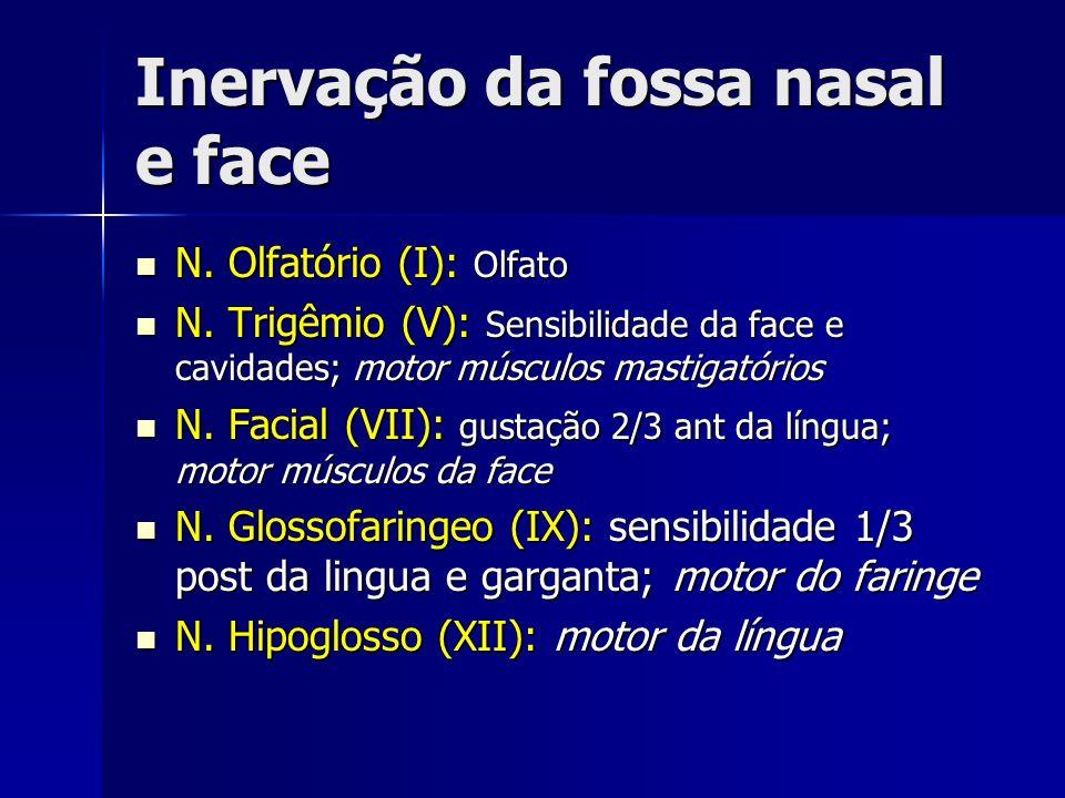 Inervação da fossa nasal e face N. Olfatório (I): Olfato N. Olfatório (I): Olfato N. Trigêmio (V): Sensibilidade da face e cavidades; motor músculos m