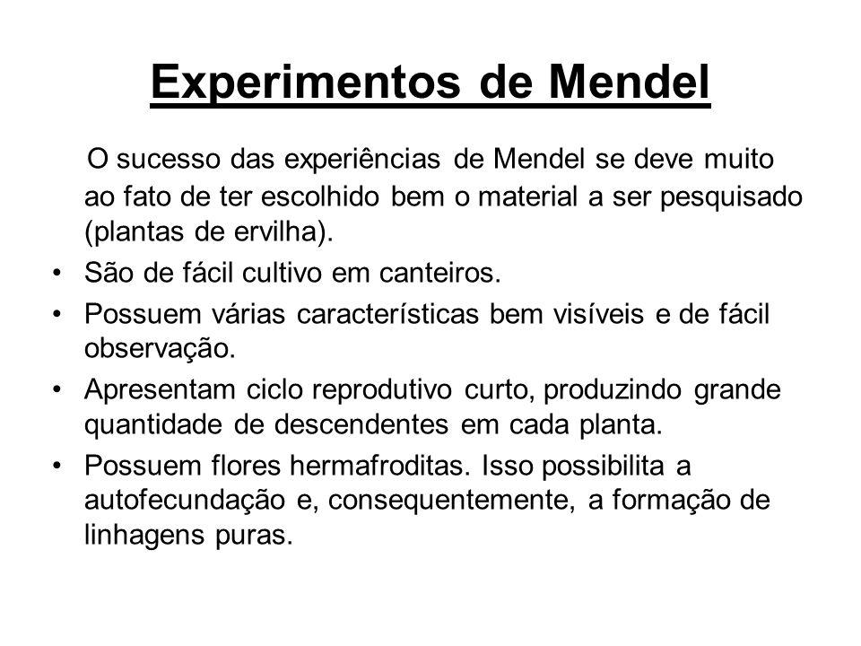 Experimentos de Mendel O sucesso das experiências de Mendel se deve muito ao fato de ter escolhido bem o material a ser pesquisado (plantas de ervilha