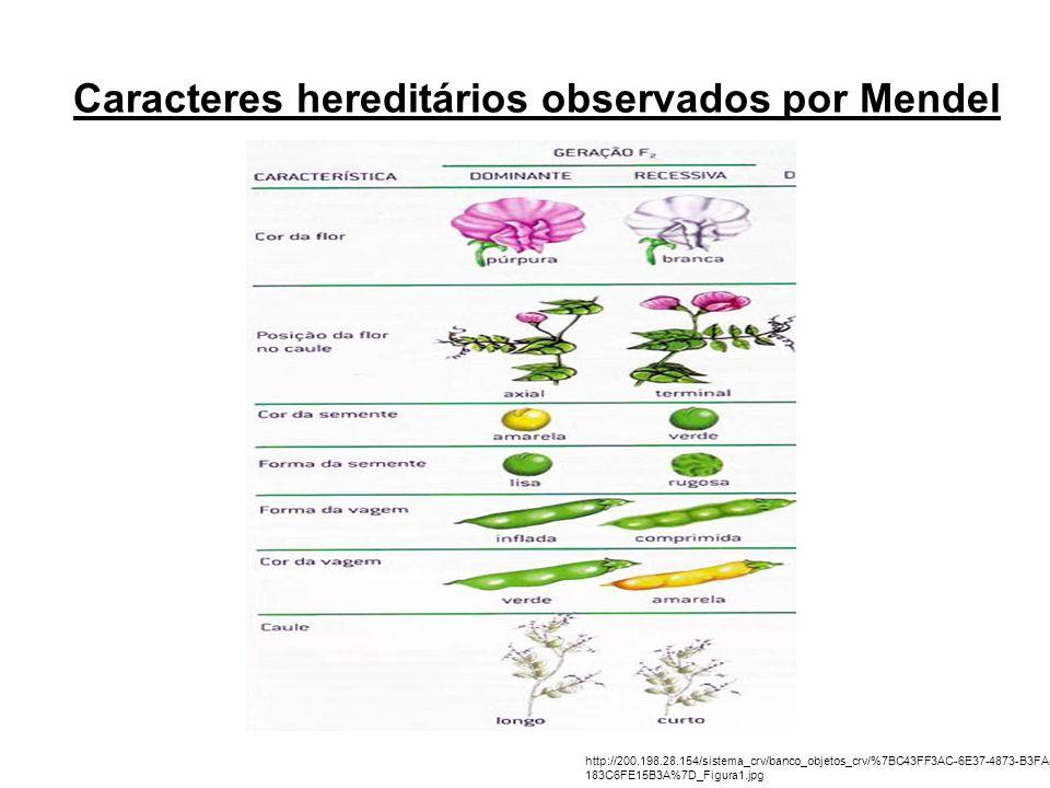 Caracteres hereditários observados por Mendel http://200.198.28.154/sistema_crv/banco_objetos_crv/%7BC43FF3AC-6E37-4873-B3FA- 183C6FE15B3A%7D_Figura1.