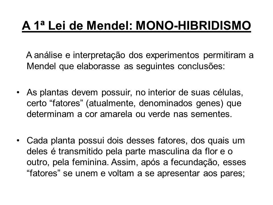 A 1ª Lei de Mendel: MONO-HIBRIDISMO A análise e interpretação dos experimentos permitiram a Mendel que elaborasse as seguintes conclusões: As plantas