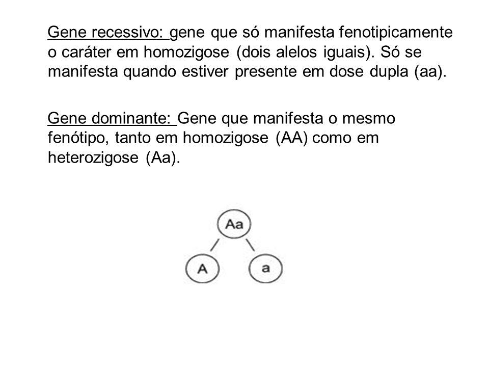 Gene recessivo: gene que só manifesta fenotipicamente o caráter em homozigose (dois alelos iguais). Só se manifesta quando estiver presente em dose du