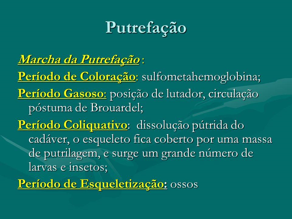 Putrefação Marcha da Putrefação : Período de Coloração: sulfometahemoglobina; Período Gasoso: posição de lutador, circulação póstuma de Brouardel; Per