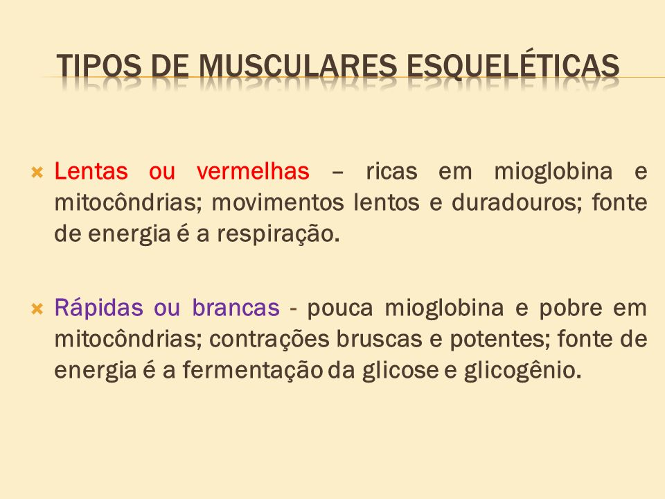 Lentas ou vermelhas – ricas em mioglobina e mitocôndrias; movimentos lentos e duradouros; fonte de energia é a respiração. Rápidas ou brancas - pouca
