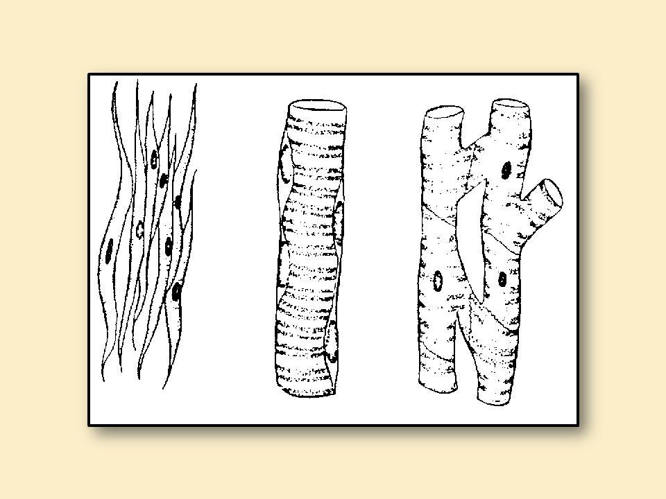 DENOMINAÇÕES ESPECÍFICAS Membrana plasmática = sarcolema; Citoplasma = sarcoplasma; Retículo Endoplasmático liso = retículo sarcoplasmático.