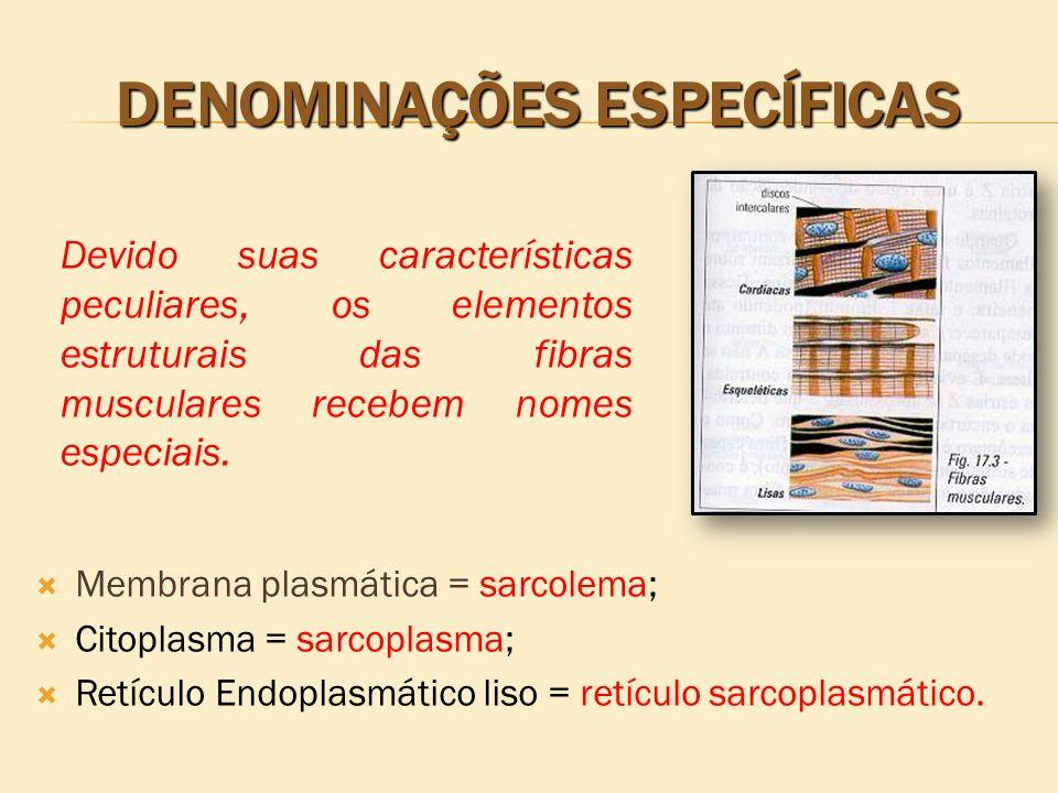 DENOMINAÇÕES ESPECÍFICAS Membrana plasmática = sarcolema; Citoplasma = sarcoplasma; Retículo Endoplasmático liso = retículo sarcoplasmático. Devido su