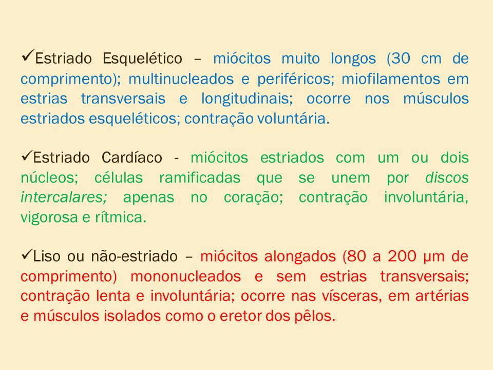 Estriado Esquelético – miócitos muito longos (30 cm de comprimento); multinucleados e periféricos; miofilamentos em estrias transversais e longitudina