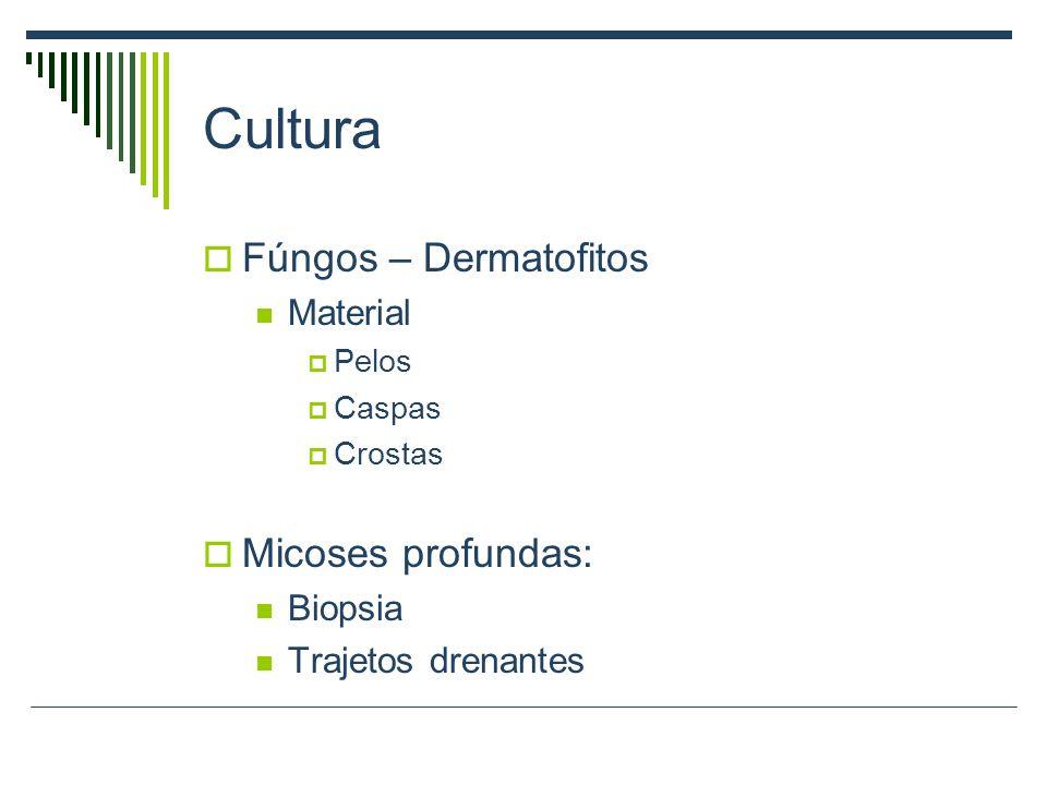 Cultura Fúngos – Dermatofitos Material Pelos Caspas Crostas Micoses profundas: Biopsia Trajetos drenantes