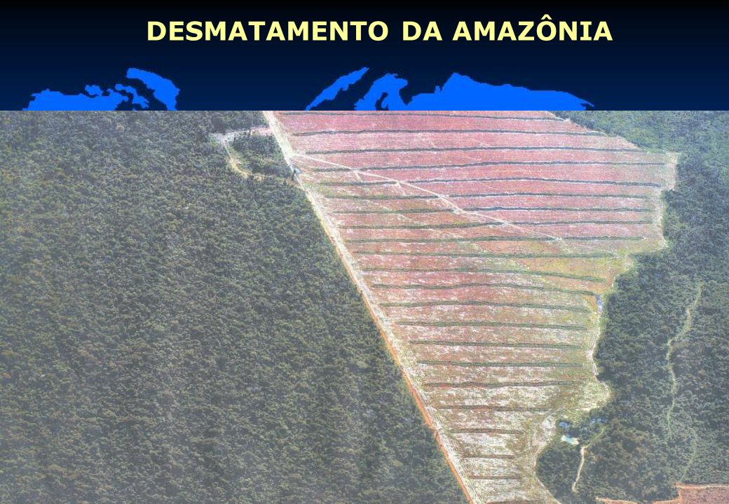 26 DESMATAMENTO DA AMAZÔNIA