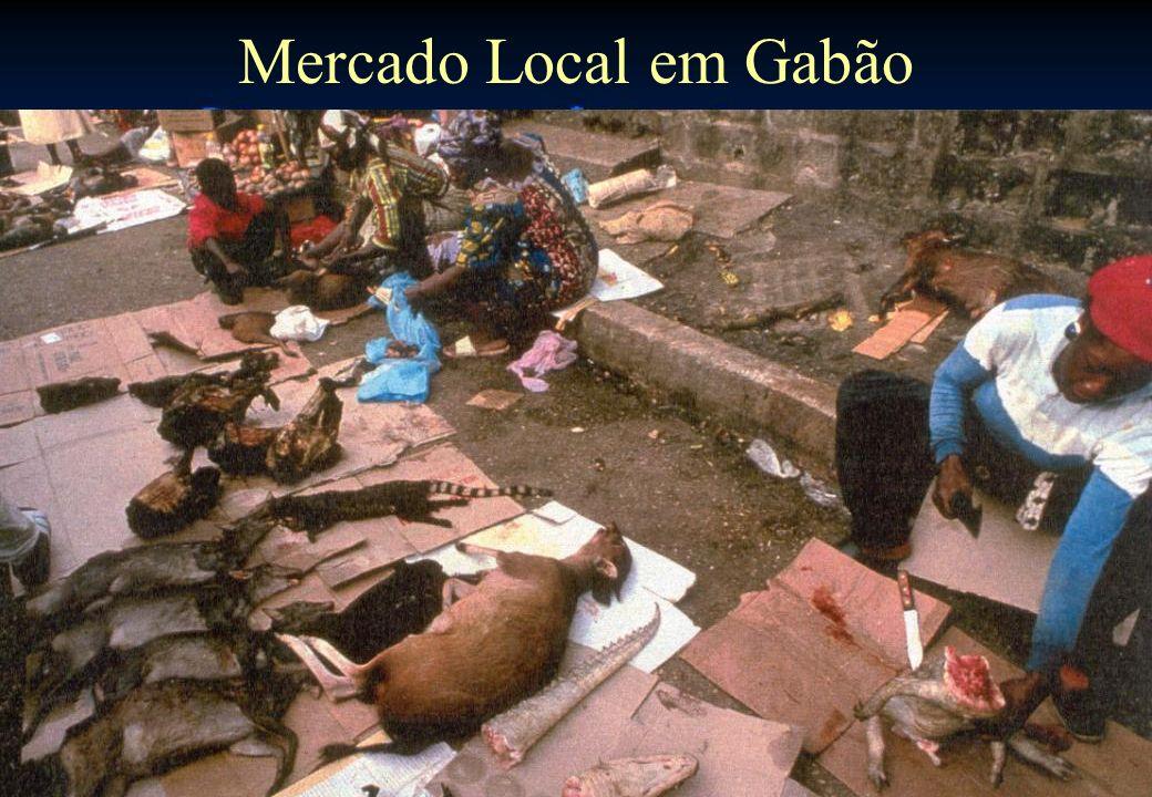 49 Mercado Local em Gabão