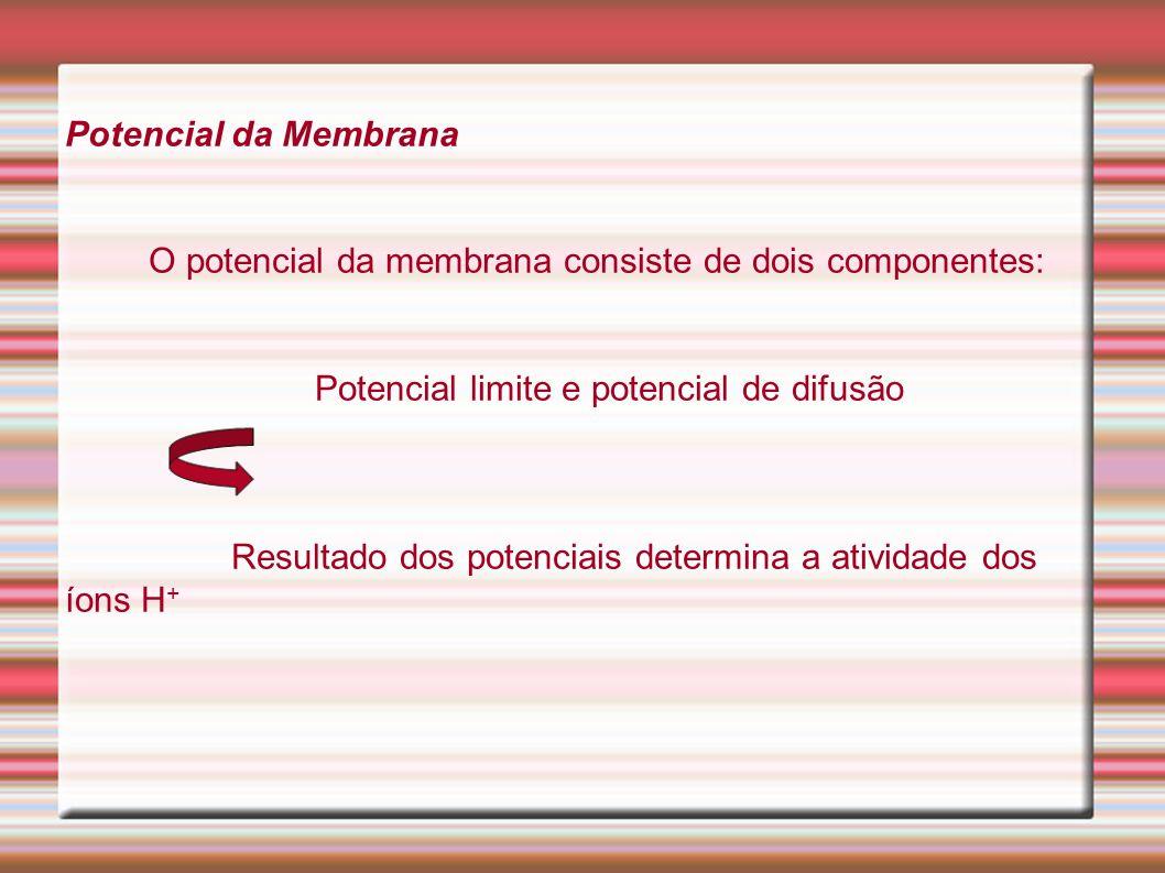 Potencial da Membrana O potencial da membrana consiste de dois componentes: Potencial limite e potencial de difusão Resultado dos potenciais determina