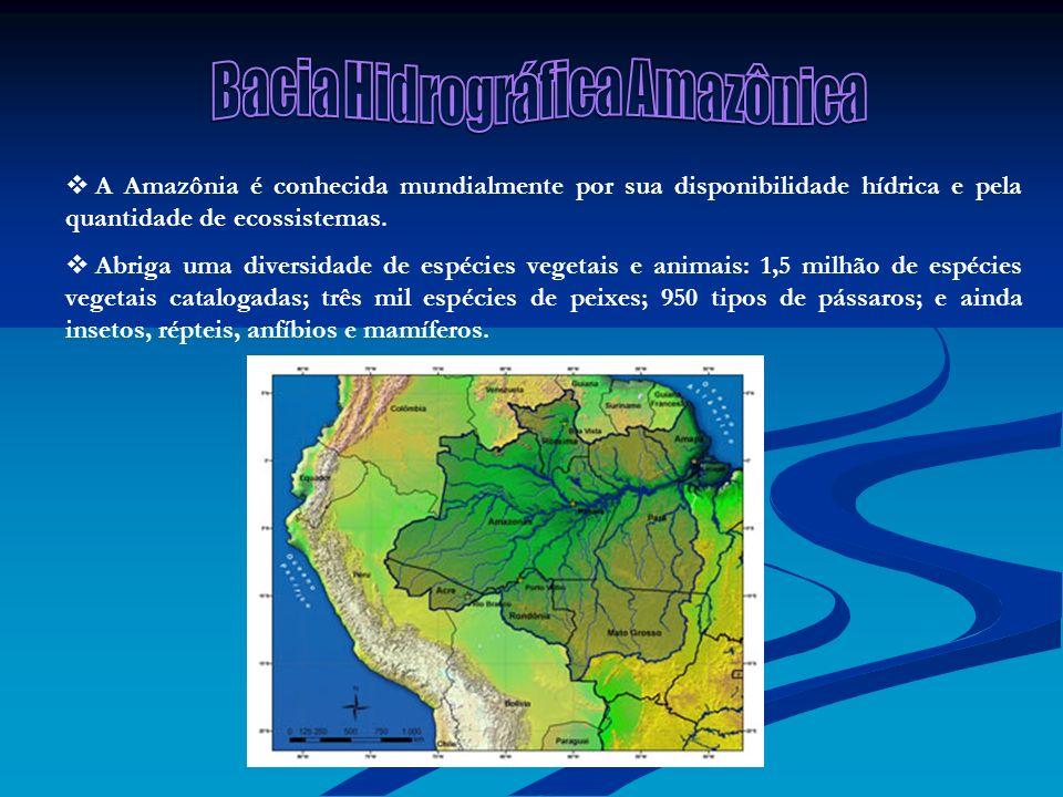 A Amazônia é conhecida mundialmente por sua disponibilidade hídrica e pela quantidade de ecossistemas. Abriga uma diversidade de espécies vegetais e a