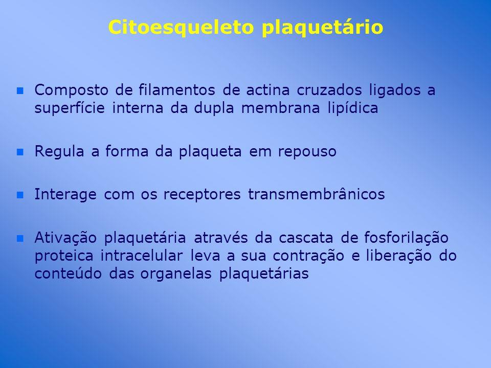 Citoesqueleto plaquetário n n Composto de filamentos de actina cruzados ligados a superfície interna da dupla membrana lipídica n n Regula a forma da