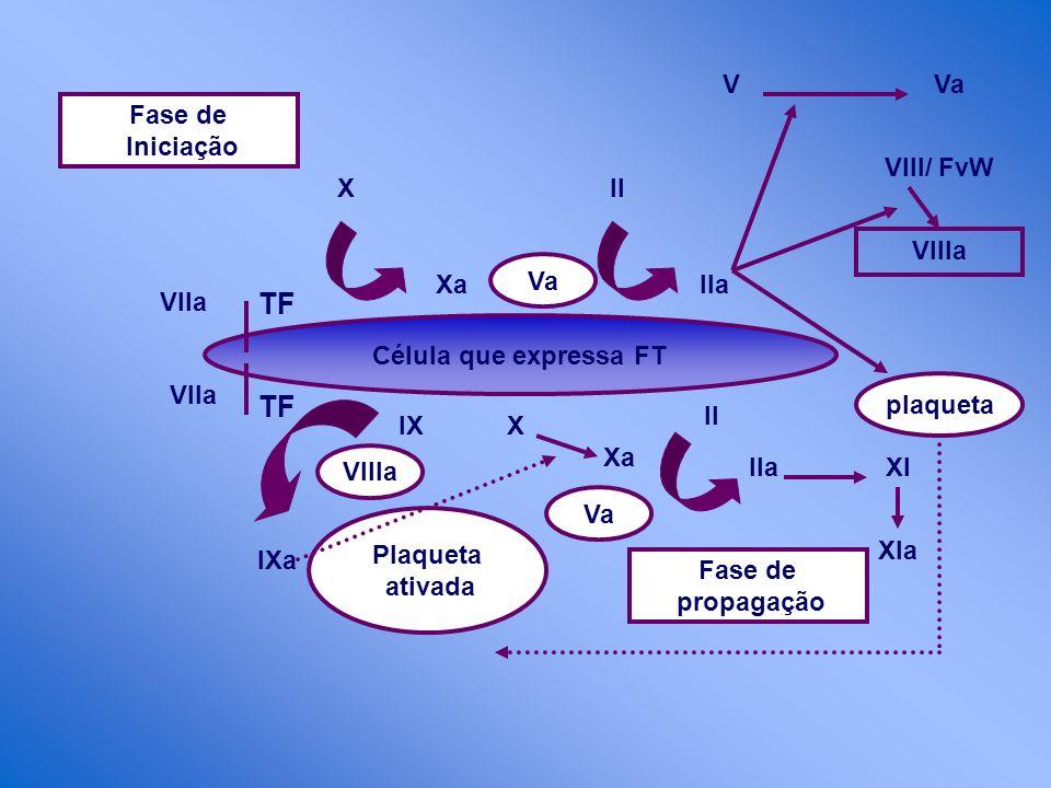 Célula que expressa FT Fase de propagação Va VIIIa Xa XII IIa VVa VIII/ FvW VIIIa plaqueta II IIaXI Xla X Xa IX Plaqueta ativada IXa TF Vlla Fase de I