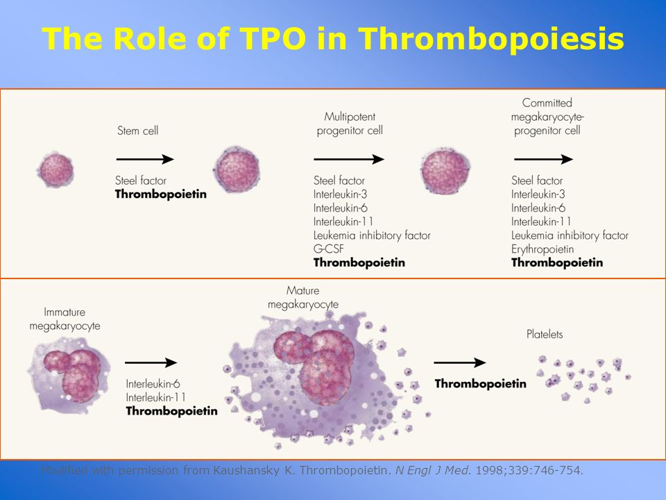 The Role of TPO in Thrombopoiesis Modified with permission from Kaushansky K. Thrombopoietin. N Engl J Med. 1998;339:746-754.