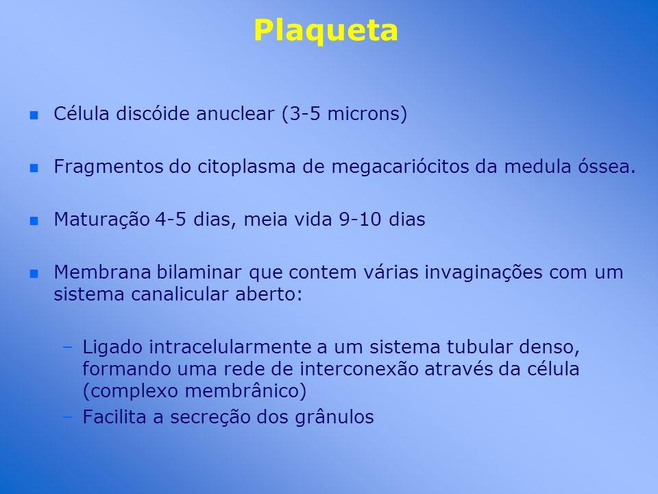 Plaqueta n n Célula discóide anuclear (3-5 microns) n n Fragmentos do citoplasma de megacariócitos da medula óssea. n n Maturação 4-5 dias, meia vida