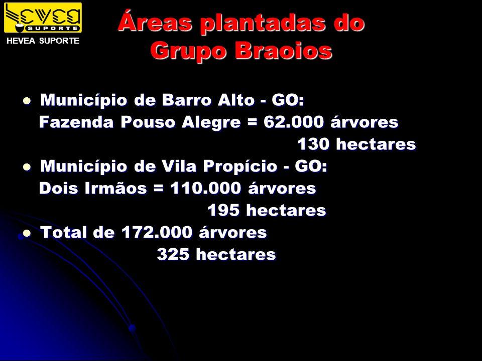 Áreas plantadas do Grupo Braoios Município de Barro Alto - GO: Município de Barro Alto - GO: Fazenda Pouso Alegre = 62.000 árvores Fazenda Pouso Alegr