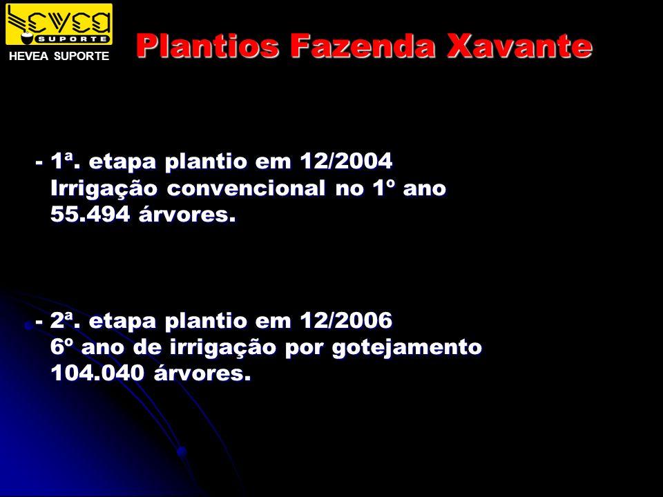 Plantios Fazenda Xavante - 1ª. etapa plantio em 12/2004 Irrigação convencional no 1º ano Irrigação convencional no 1º ano 55.494 árvores. 55.494 árvor