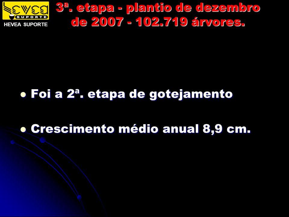3ª. etapa - plantio de dezembro de 2007 - 102.719 árvores. Foi a 2ª. etapa de gotejamento Foi a 2ª. etapa de gotejamento Crescimento médio anual 8,9 c