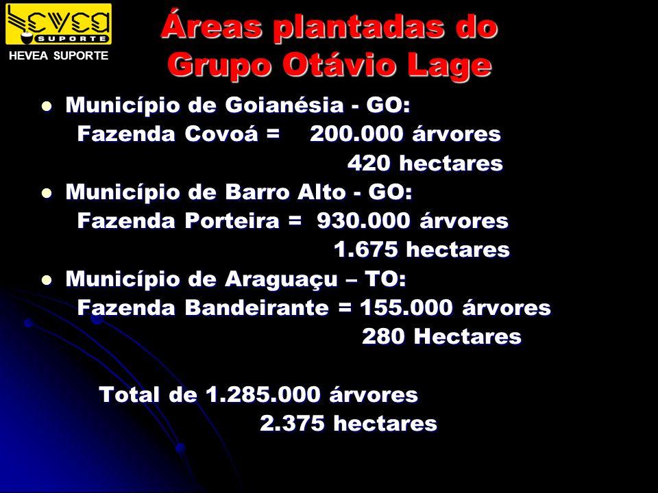 Áreas plantadas do Grupo Otávio Lage Município de Goianésia - GO: Município de Goianésia - GO: Fazenda Covoá = 200.000 árvores Fazenda Covoá = 200.000