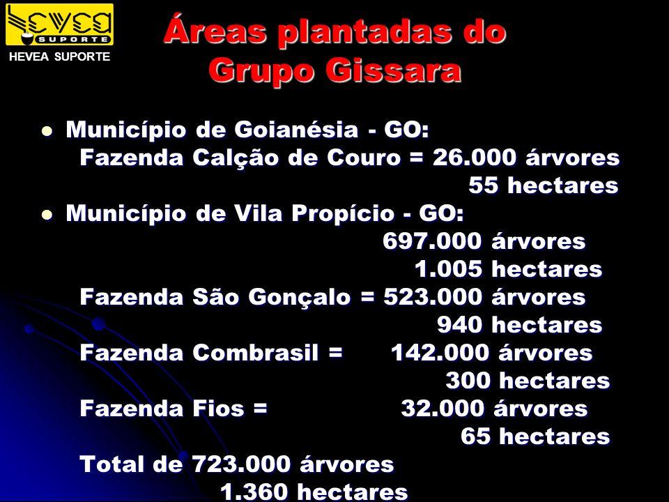 Áreas plantadas do Grupo Gissara Município de Goianésia - GO: Município de Goianésia - GO: Fazenda Calção de Couro = 26.000 árvores Fazenda Calção de