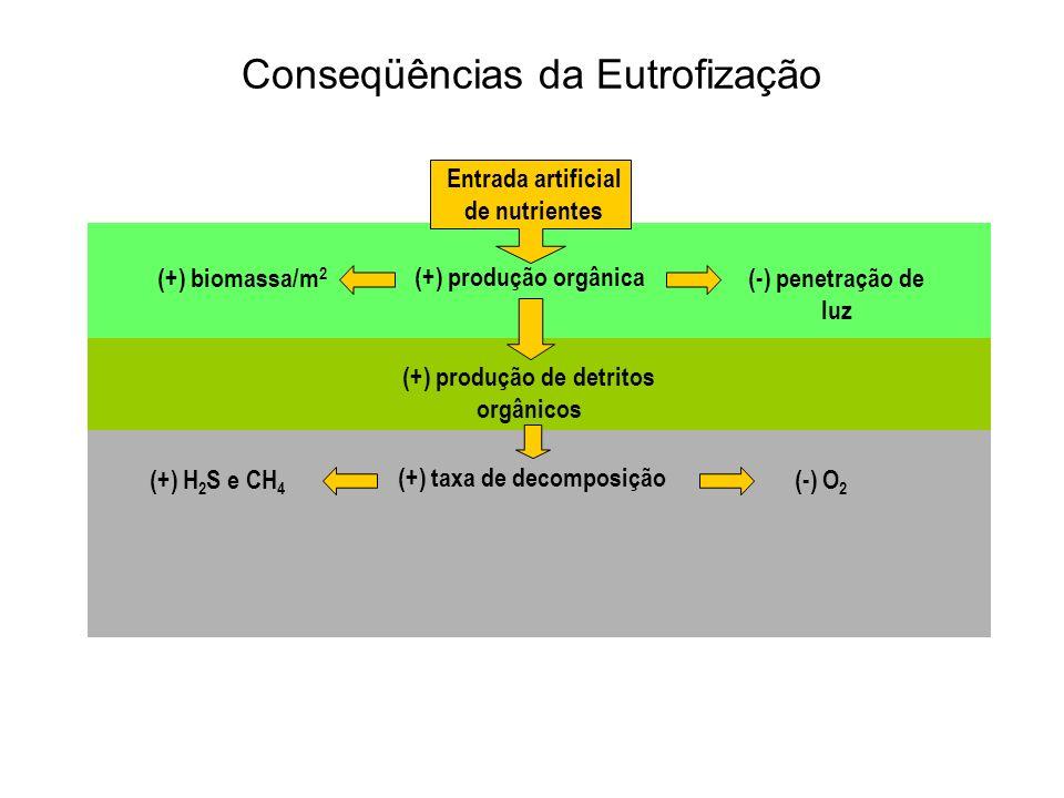 Entrada artificial de nutrientes (+) produção orgânica (+) produção de detritos orgânicos (+) taxa de decomposição (+) biomassa/m 2 (-) penetração de luz (+) H 2 S e CH 4 (-) O 2