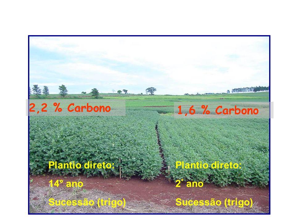 Plantio direto: 14° ano Sucessão (trigo) 2,2 % Carbono 1,6 % Carbono Plantio direto: 2 ° ano Sucessão (trigo)