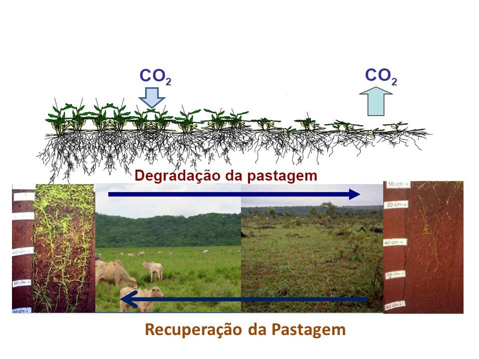 Sousa, et al., 1997 Sucessão soja/milho Pasto depois de lavoura Lavoura depois de pasto Integração Lavoura Pecuária
