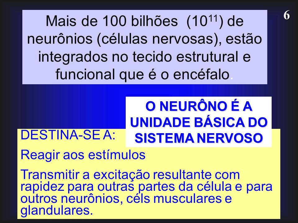 6 DESTINA-SE A: Reagir aos estímulos Transmitir a excitação resultante com rapidez para outras partes da célula e para outros neurônios, céls muscular