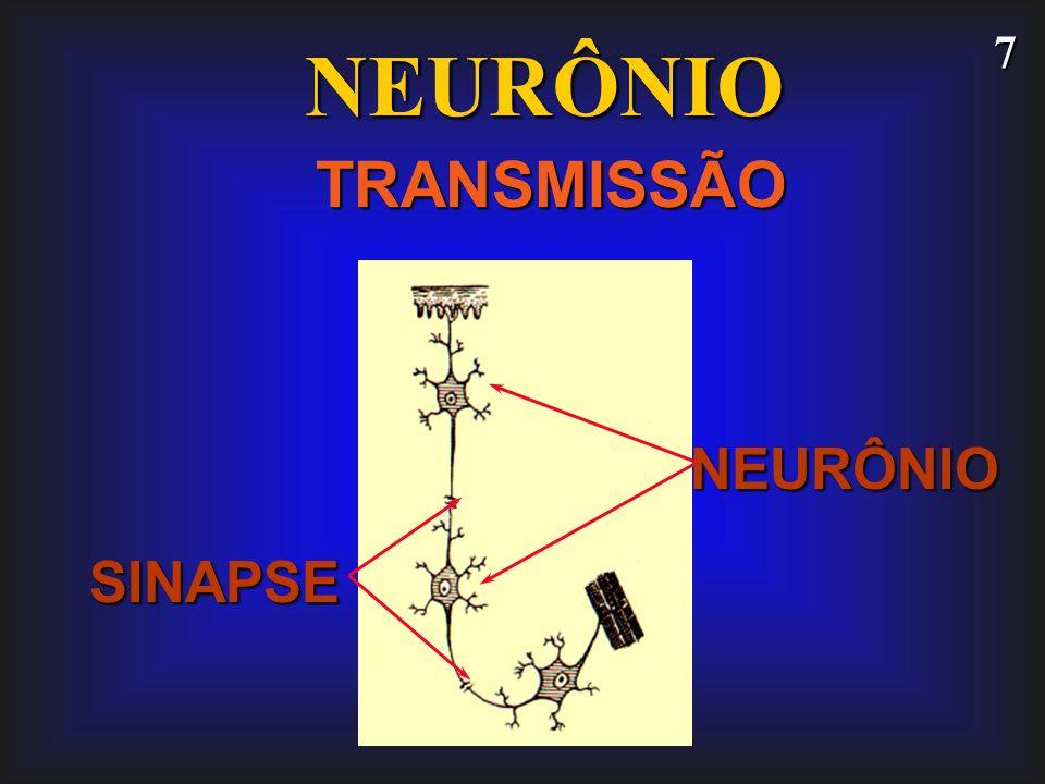 7 NEURÔNIO TRANSMISSÃO SINAPSE NEURÔNIO