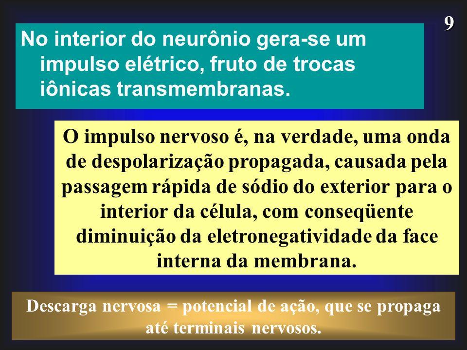 9 No interior do neurônio gera-se um impulso elétrico, fruto de trocas iônicas transmembranas. O impulso nervoso é, na verdade, uma onda de despolariz
