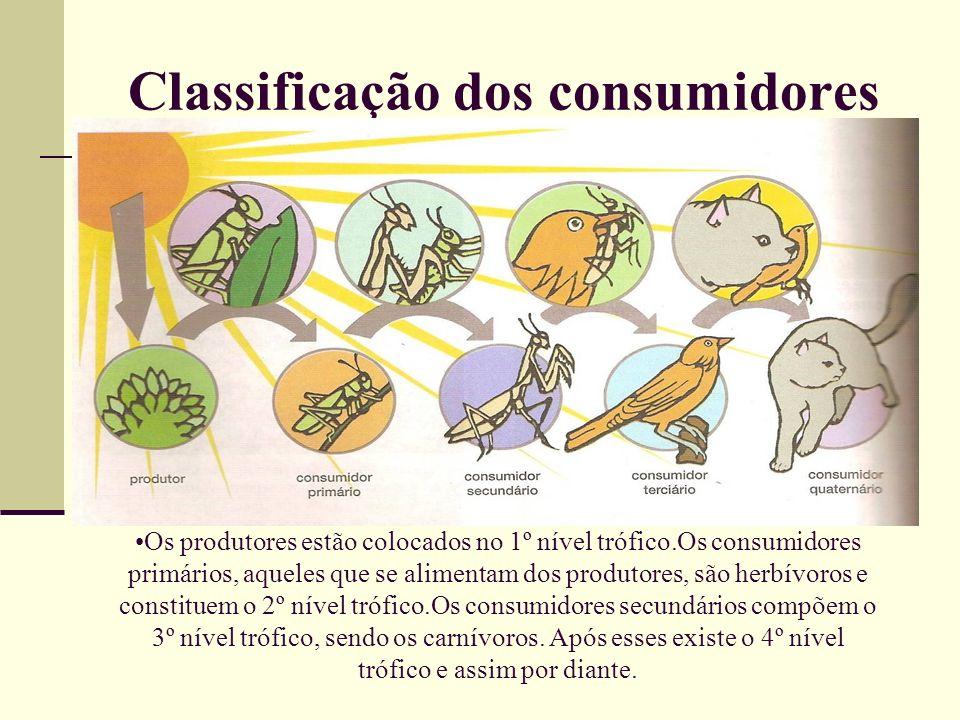 Classificação dos consumidores Os produtores estão colocados no 1º nível trófico.Os consumidores primários, aqueles que se alimentam dos produtores, s