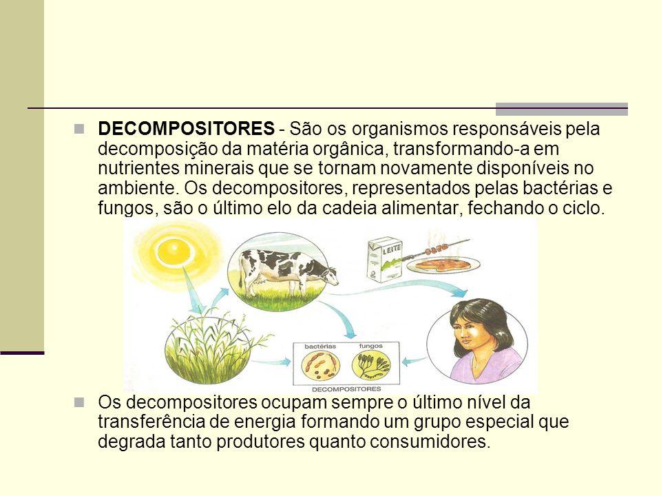 DECOMPOSITORES - São os organismos responsáveis pela decomposição da matéria orgânica, transformando-a em nutrientes minerais que se tornam novamente