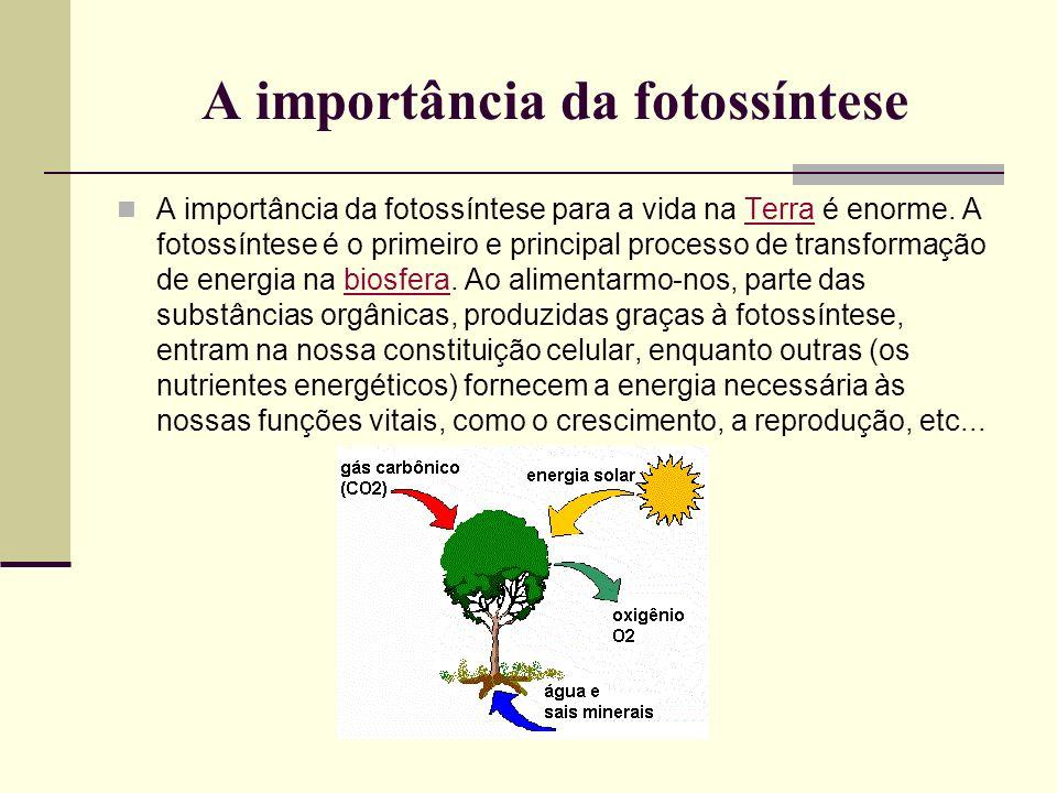 A importância da fotossíntese A importância da fotossíntese para a vida na Terra é enorme. A fotossíntese é o primeiro e principal processo de transfo