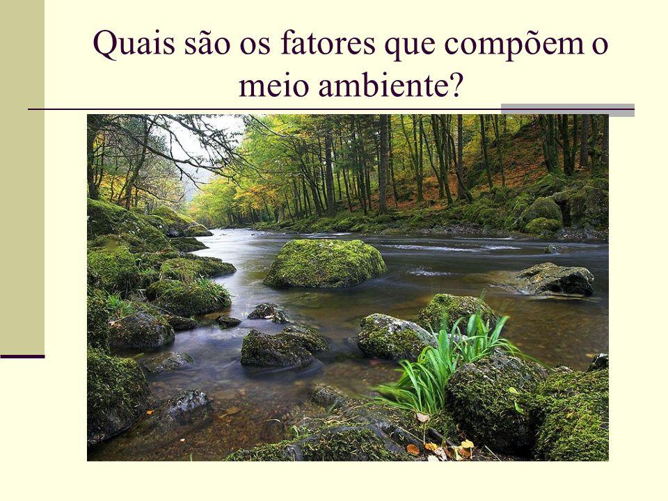 Quais são os fatores que compõem o meio ambiente?