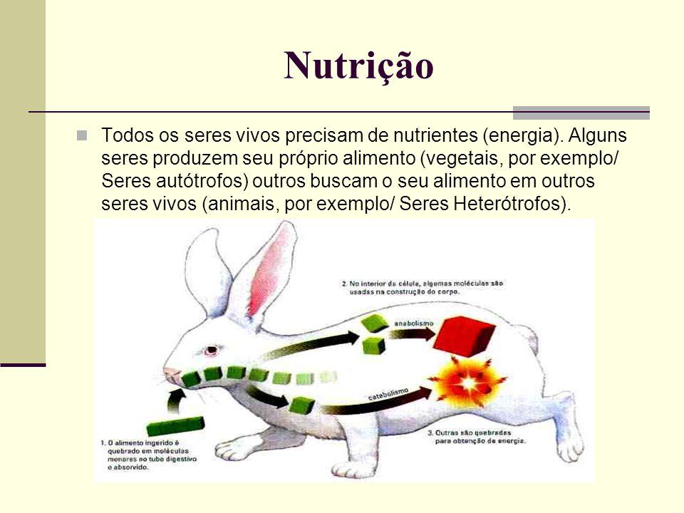 Nutrição Todos os seres vivos precisam de nutrientes (energia). Alguns seres produzem seu próprio alimento (vegetais, por exemplo/ Seres autótrofos) o