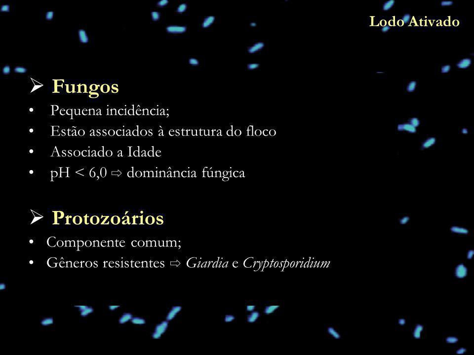 Fungos Pequena incidência; Estão associados à estrutura do floco Associado a Idade pH < 6,0 dominância fúngica Protozoários Componente comum; Gêneros