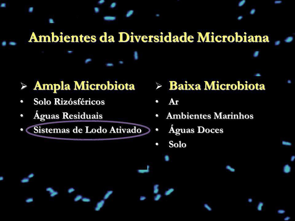 Ambientes da Diversidade Microbiana Ampla Microbiota Ampla Microbiota Solo Rizósféricos Solo Rizósféricos Águas Residuais Águas Residuais Sistemas de
