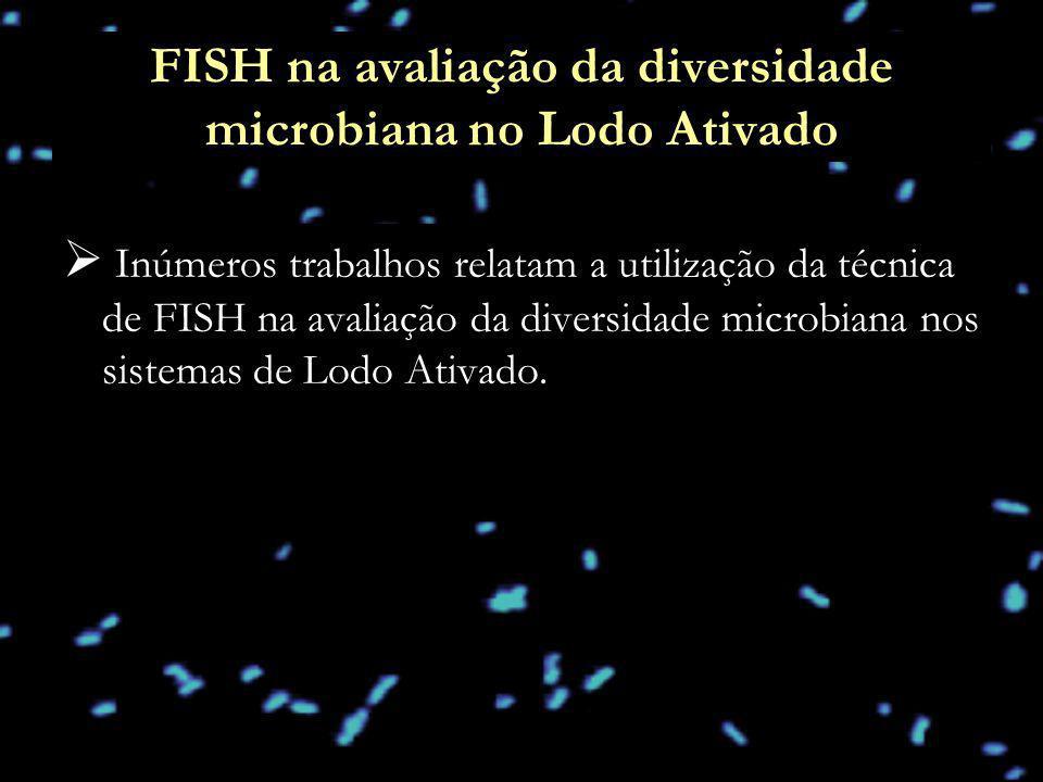 FISH na avaliação da diversidade microbiana no Lodo Ativado Inúmeros trabalhos relatam a utilização da técnica de FISH na avaliação da diversidade mic