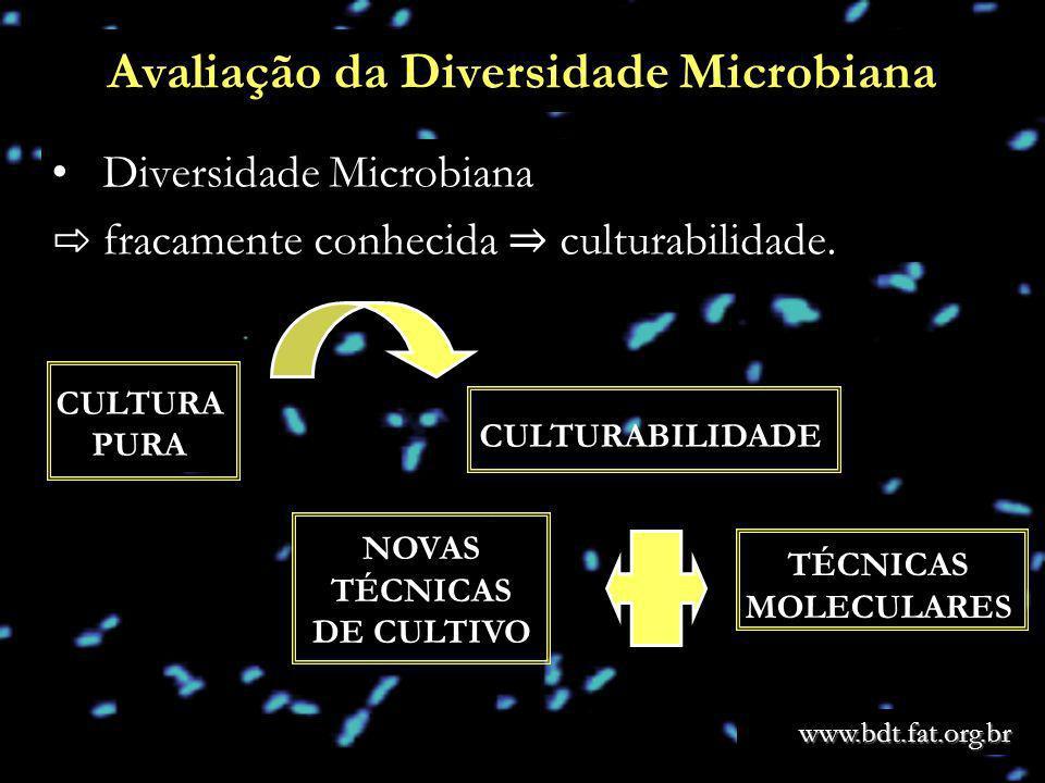 Avaliação da Diversidade Microbiana Diversidade Microbiana fracamente conhecida culturabilidade. CULTURABILIDADE CULTURA PURA TÉCNICAS MOLECULARES NOV