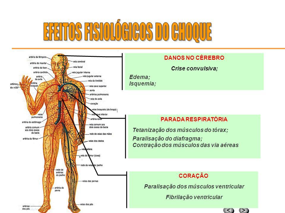 > > < < DANOS NA VISÃO Córneas Cristalino Nervo ótico DANOS AOS RINS / BEXIGA Insuficiência renal Eneuresia ( incontinência urinária ) PERDA DA COORDE