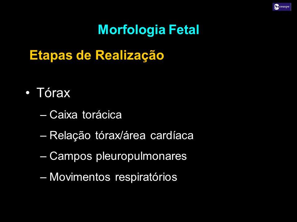 Tórax –Caixa torácica –Relação tórax/área cardíaca –Campos pleuropulmonares –Movimentos respiratórios Tórax –Caixa torácica –Relação tórax/área cardía