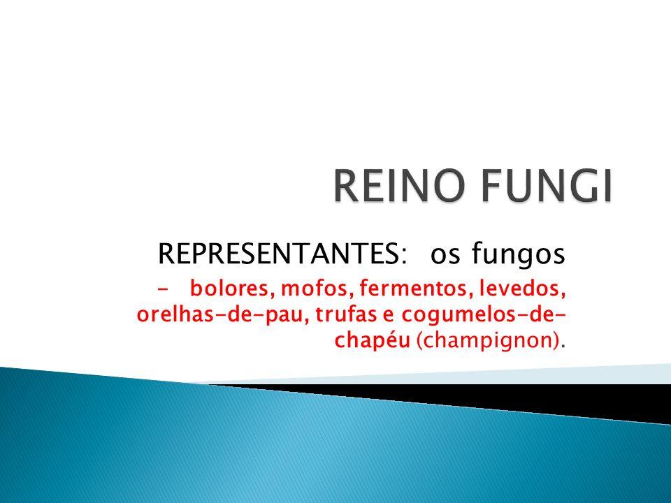 REPRESENTANTES: os fungos - bolores, mofos, fermentos, levedos, orelhas-de-pau, trufas e cogumelos-de- chapéu (champignon).
