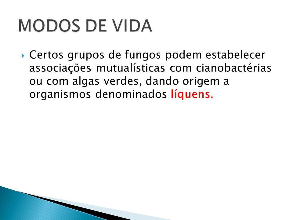 Certos grupos de fungos podem estabelecer associações mutualísticas com cianobactérias ou com algas verdes, dando origem a organismos denominados líqu